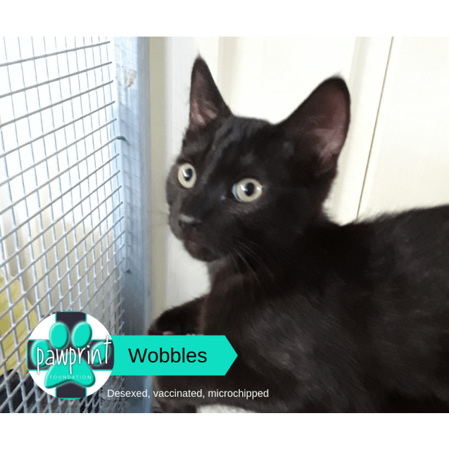 Photo of Wobbles