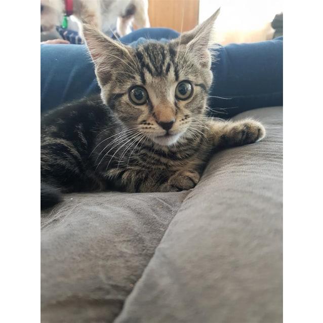 Photo of Stewie