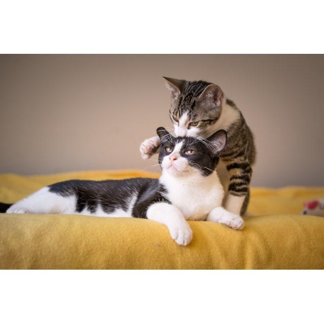 Photo of Gatsby & Gizmo
