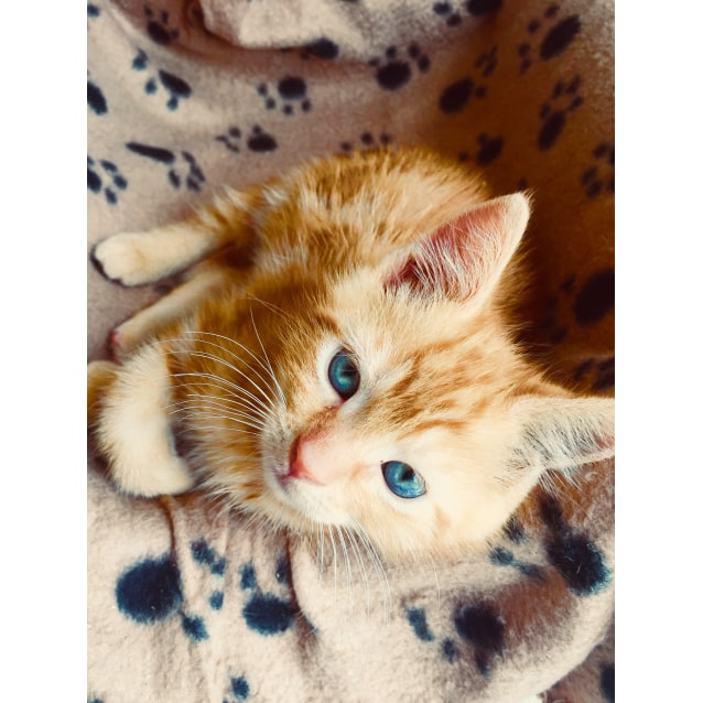 Photo of Brian From The Backstreet Boys Kittens!