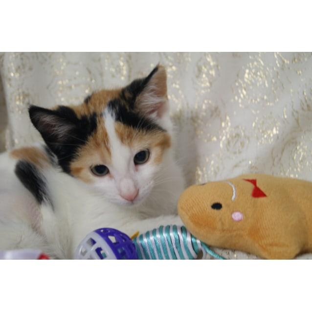 Photo of Gisela