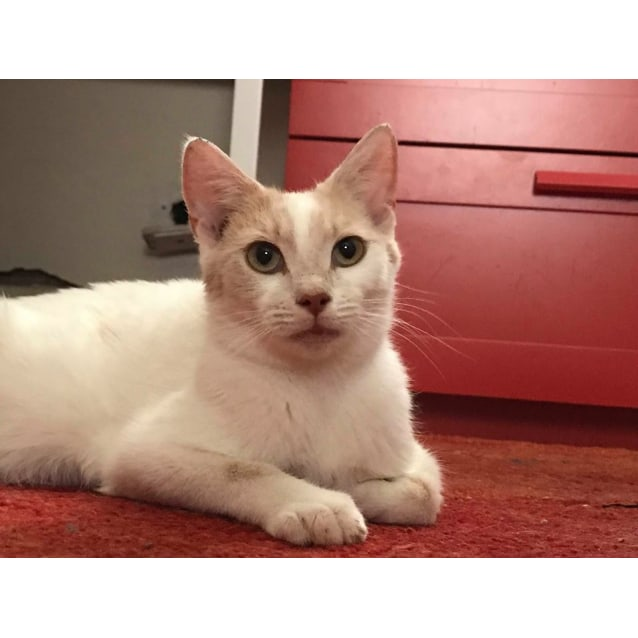 Photo of Daffodil (Located In Caulfield North)