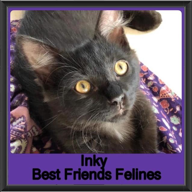 Photo of Inky