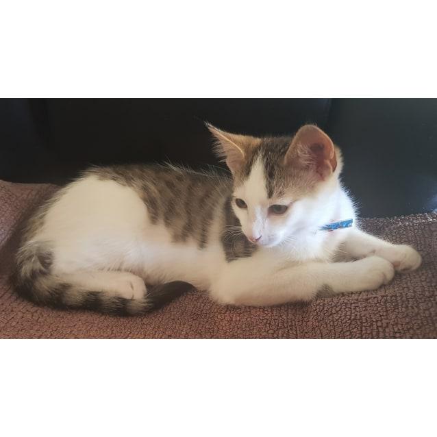 Photo of Fermie