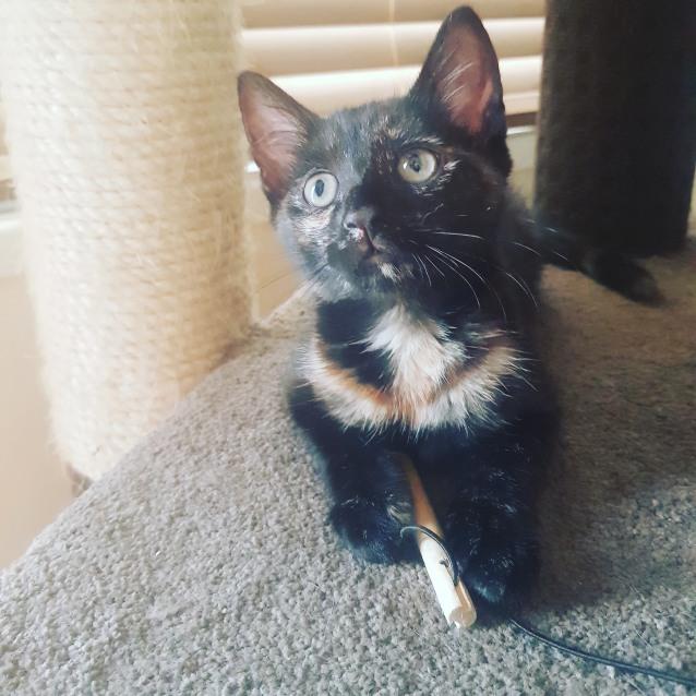 Photo of Zoey