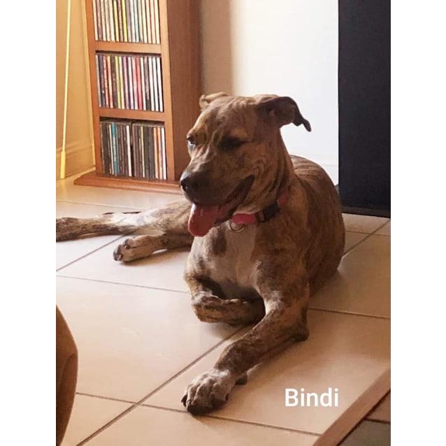 Photo of Bindi