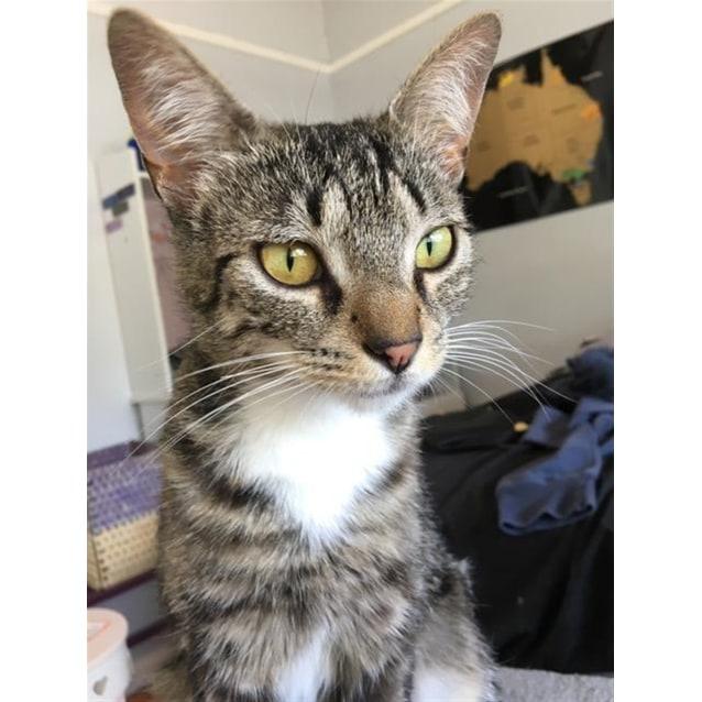 Photo of Penelope