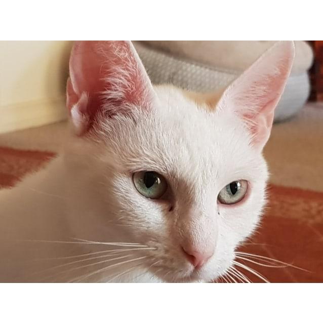 Photo of Ava ❤❤