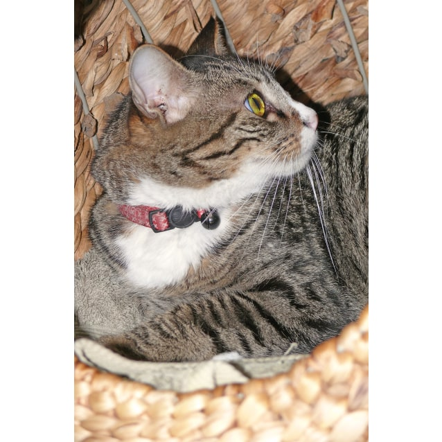 Photo of Chairman Meow