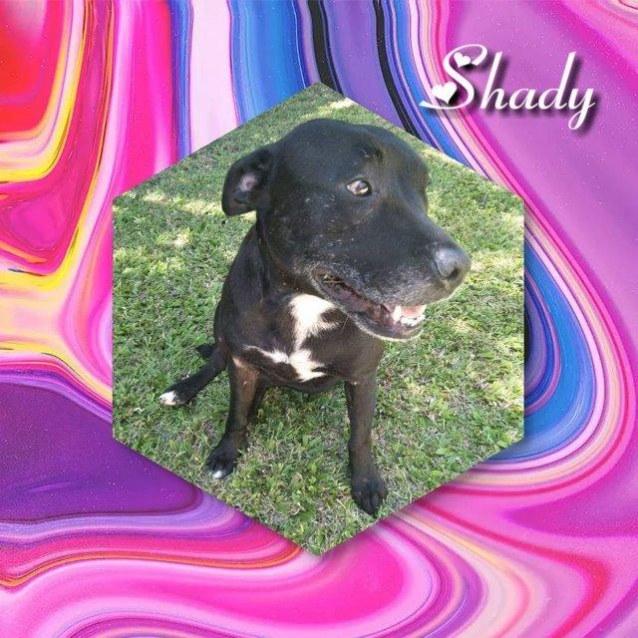 Photo of Shady