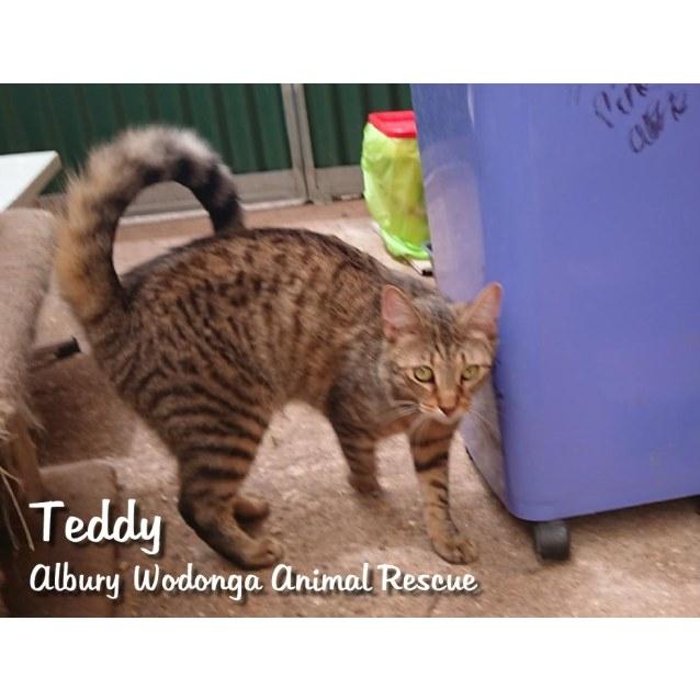 Photo of Teddy