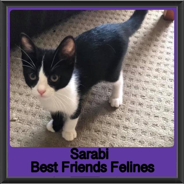 Photo of Sarabi