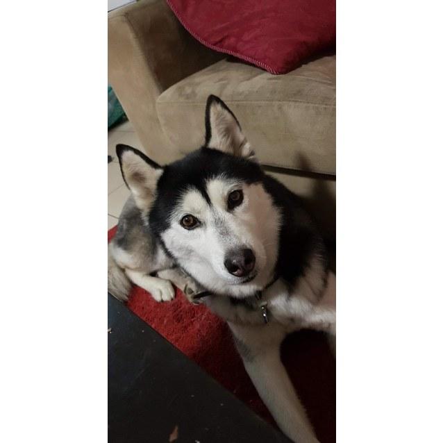 Photo of Shiloh