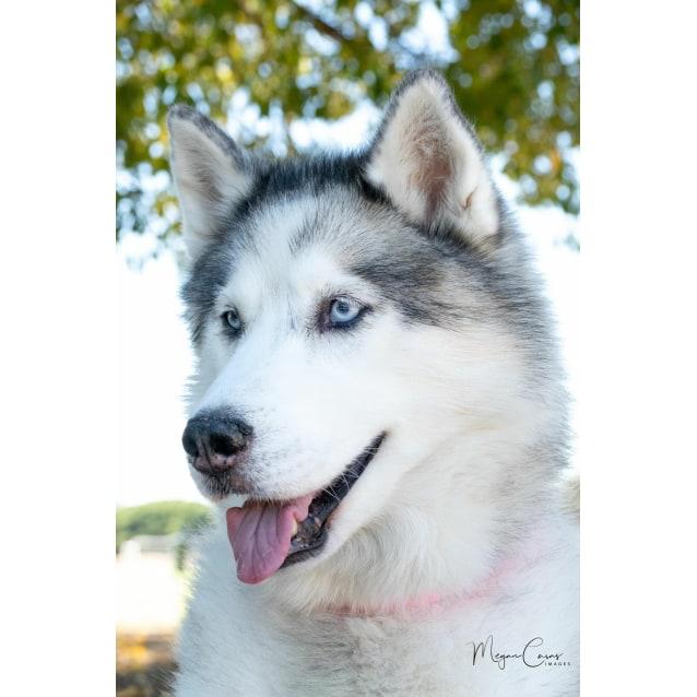 Photo of Mishka