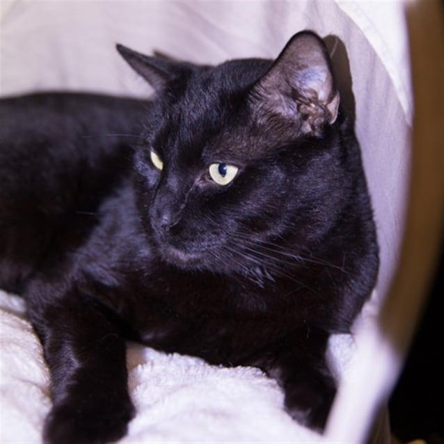 Photo of Tabby