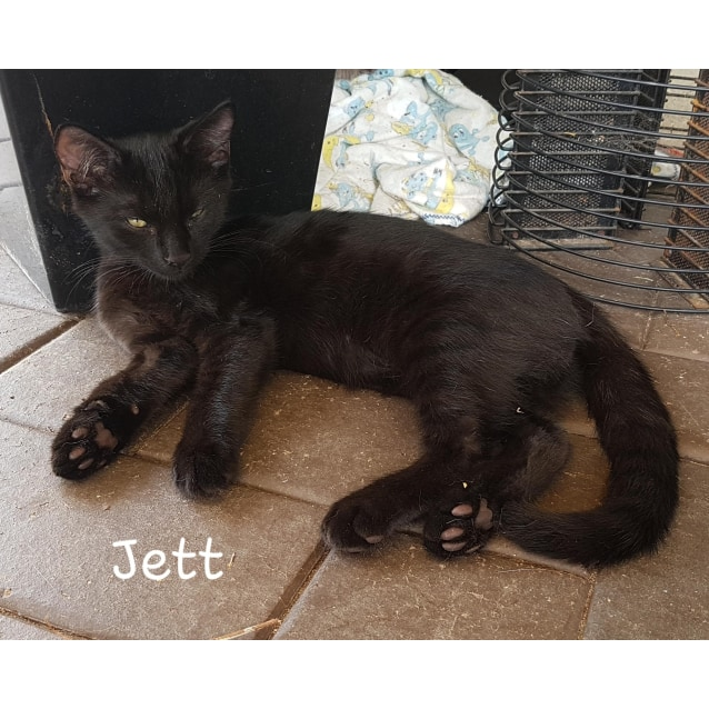 Photo of Jett