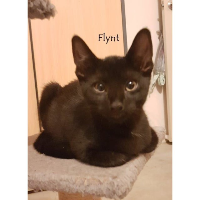 Photo of Flynt On Sale Now