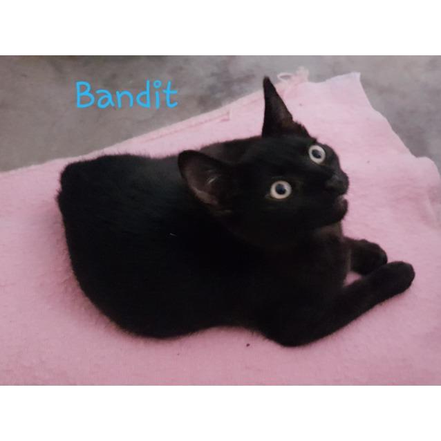 Photo of Bandit On Sale