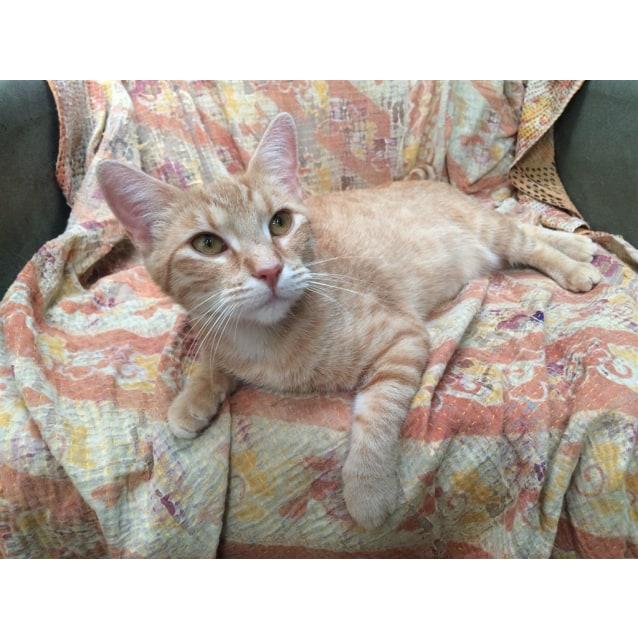 Photo of Guinivere