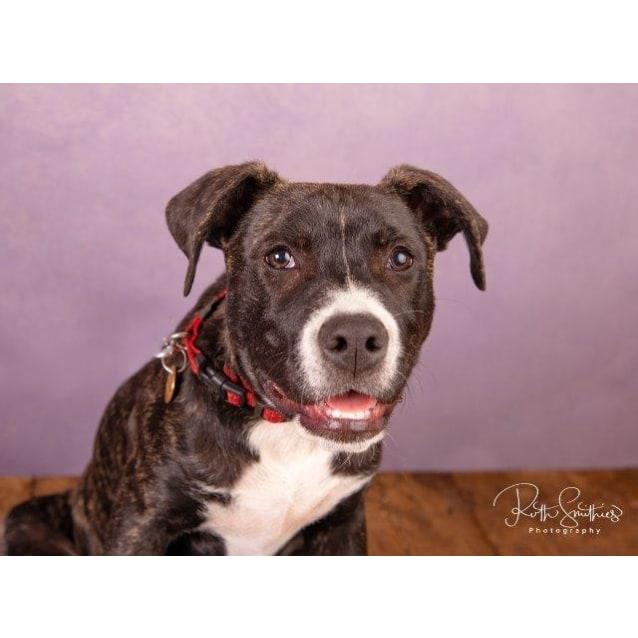 Photo of Otis