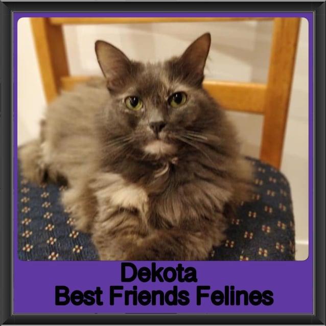 Photo of Dekota