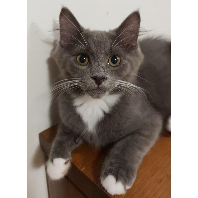 Photo of Cassius