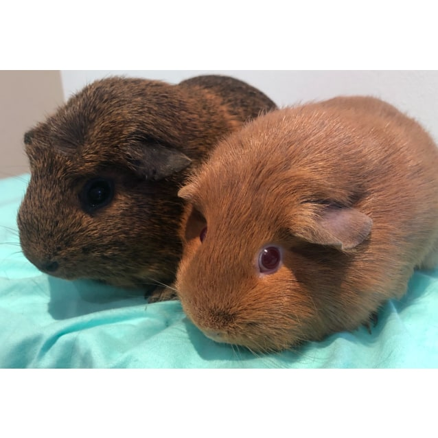 Photo of Peanut And Lilly