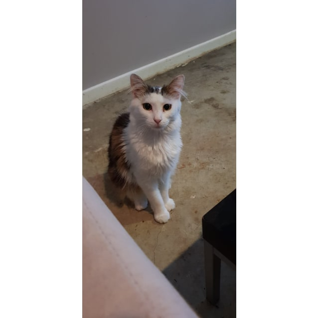 Photo of Errol (Located In Endeavour Hills)
