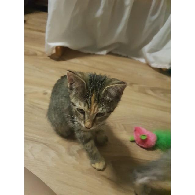 Photo of Jemima