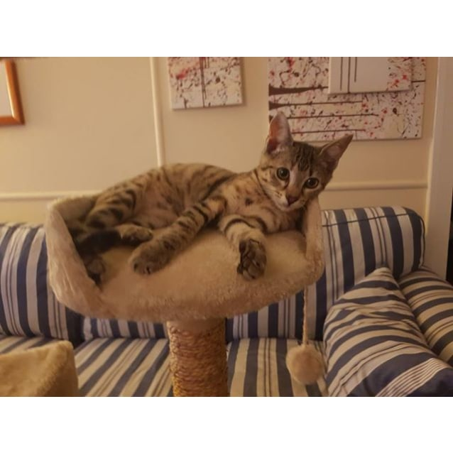 Photo of Persie