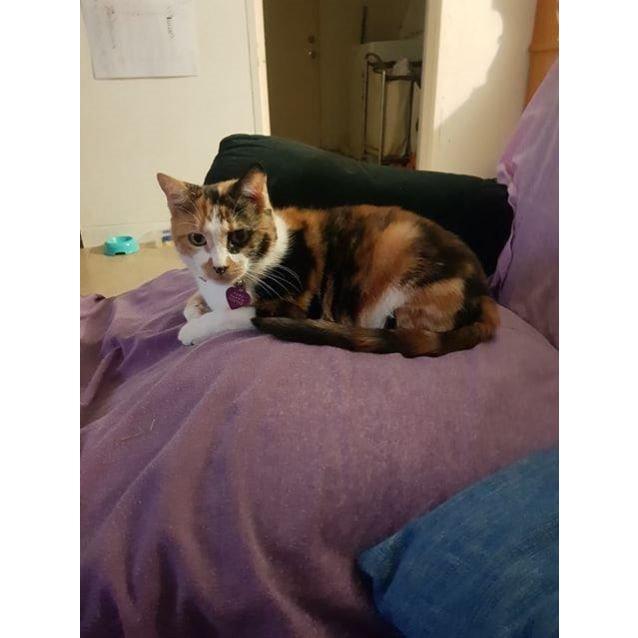 Photo of Queen Padmé