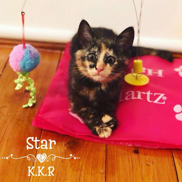 Photo of Miss Star