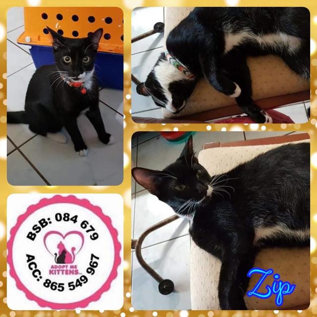 Photo of Zip