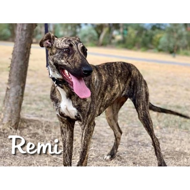 Photo of Remi