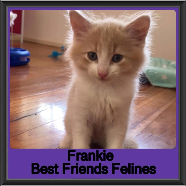 Photo of Frankie
