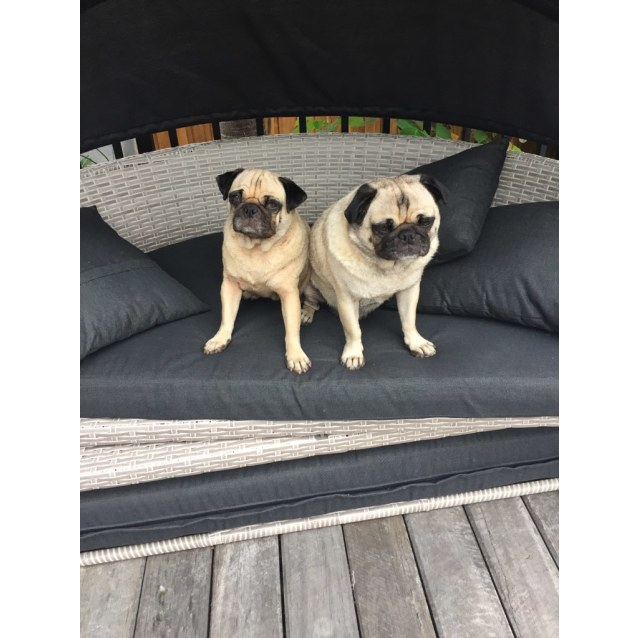 Photo of Sunny And Bo