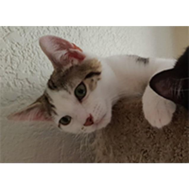 Photo of Cisco