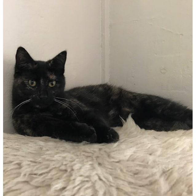 Photo of Cali    Meet Me In Cat Lounge/Neko Hq Preston