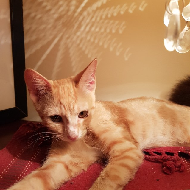 Photo of Cheddar
