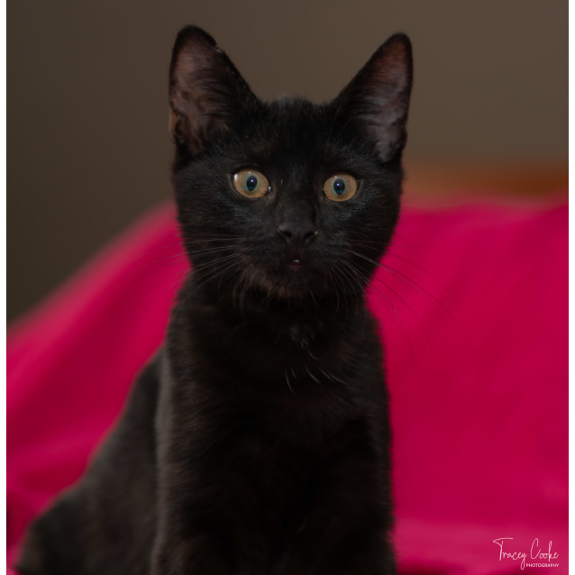 Photo of Mika