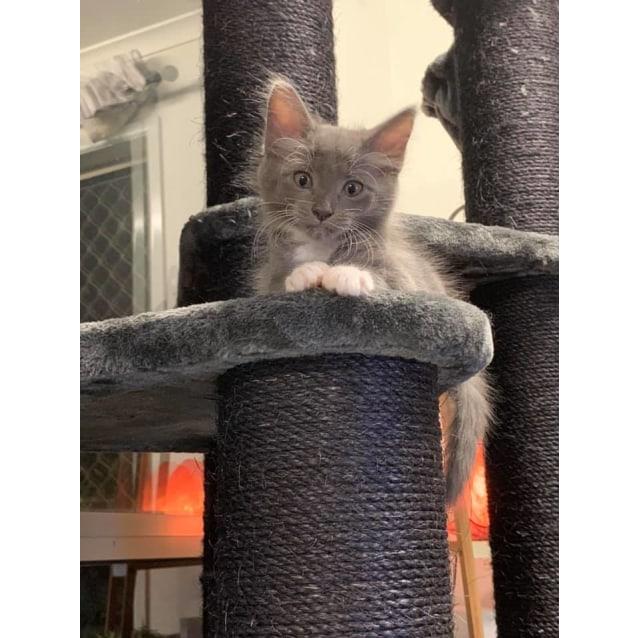 Photo of Lippy