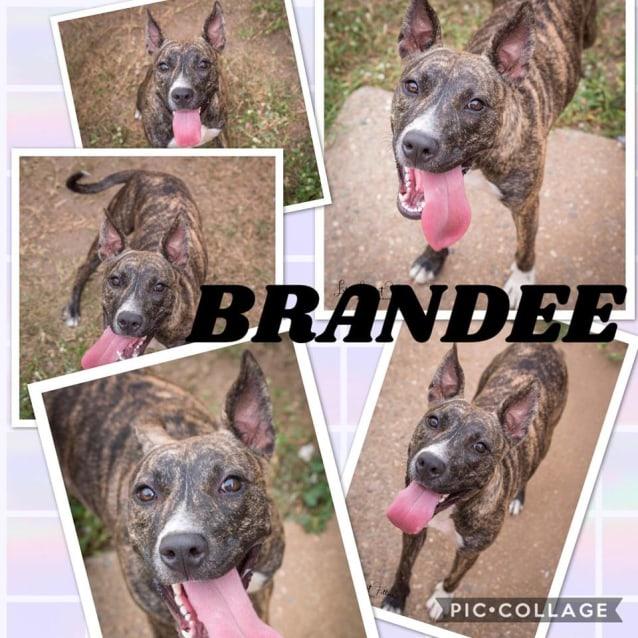Photo of Brandee