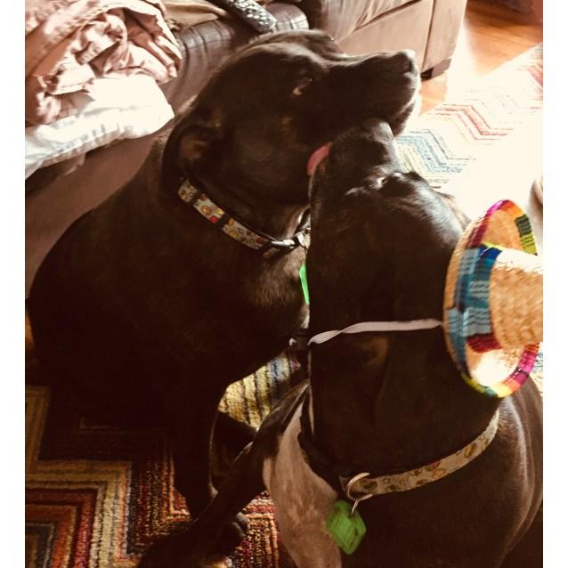Photo of Izzy And Hugo 🐳🐋