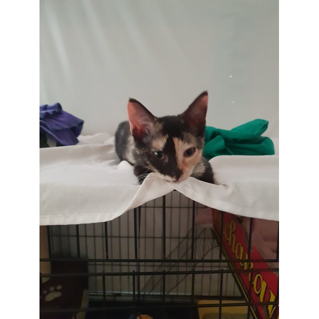 Photo of Poppy (Located In Ringwood East)