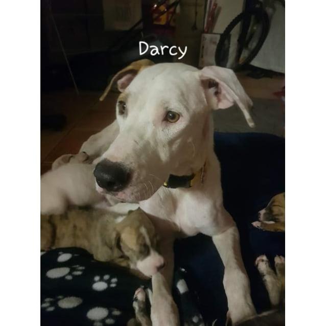Photo of Darcy