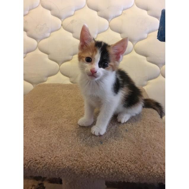 Photo of Lennox