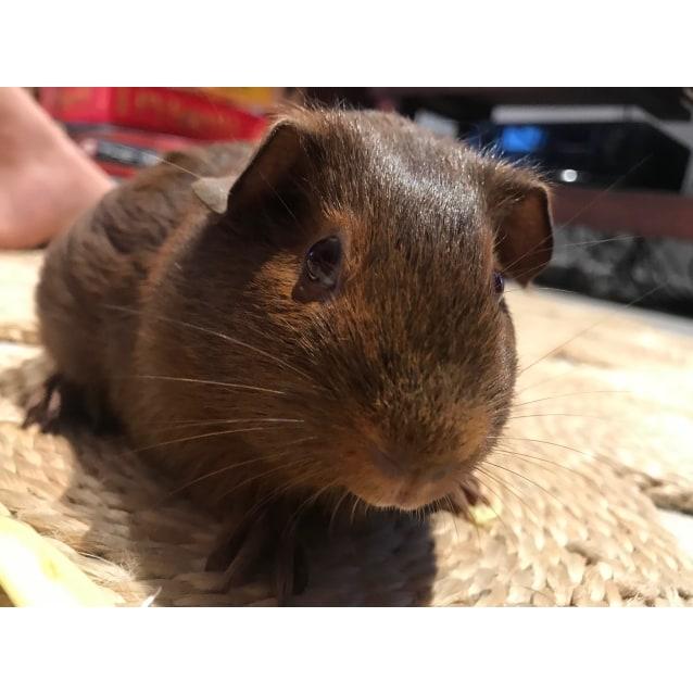 Photo of Nutmeg