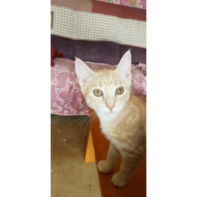 Photo of Joffa