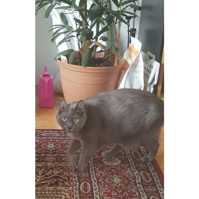 Photo of Smokey   The Russian Princess