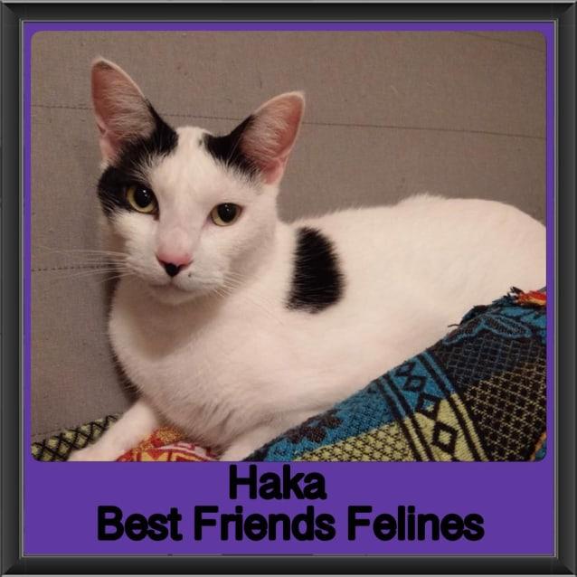 Photo of Haka